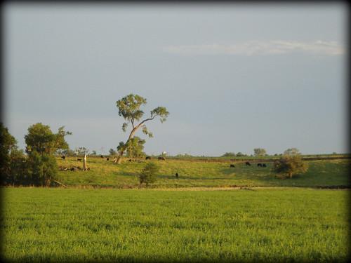 walk landscape