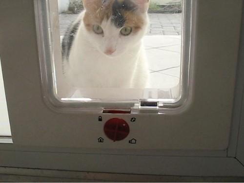 Ginny na portinha