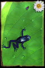 iPhone App: Ancient Frog