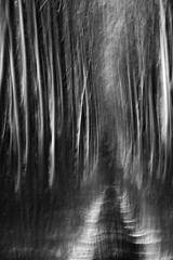 path 2 (icola tramari) Tags: wood bw blur alberi poplar strada italia grove path icm biancoenero bosco foresta pioppi mosso veneto rovigo cammino pioppeto blackwhitephotos mossocreativo polesine intentionalcameramovement nicolatramarin