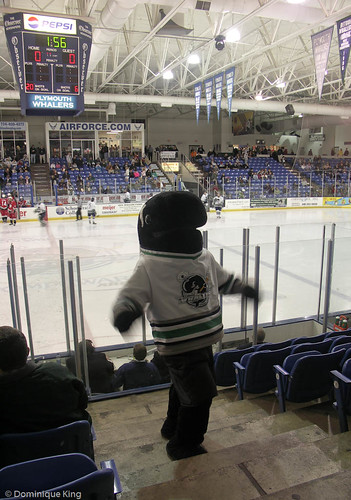 Plymouth Whalers 4