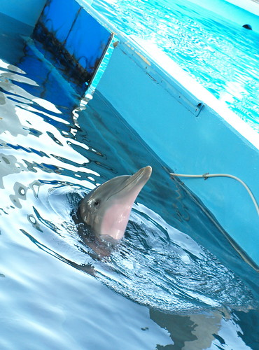 Clearwater Marine Aquarium: Winter Showing Off