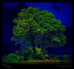 604 Tree