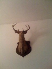 Michael Ian Black's Deer Head (pjbaldes) Tags: morning brooklyn head good taxidermy deer cellphonecamera