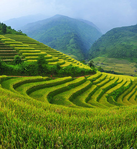 The terraced fields in Sa Pa, Vietnam