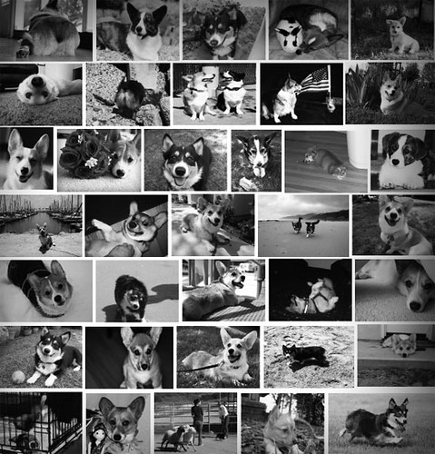 Corgi w/Blogs Calendar Submissions So Far!