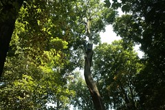 _MG_6386.JPG (zimbablade) Tags: trees sleepyhollow dougmiller videopoem