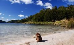 Kiwi genießt den Strand