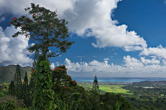 VIEW FROM THE SCENIC OVERLOOK ON PALI HIGHWAY [EXPLORE] (boydbrooks999) Tags: ocean travel blue light sunset sea summer vacation sky panorama sun mountain holiday flower tree green tourism nature water beautiful clouds forest landscape island hawaii polynesia highway rainforest scenery warm paradise view pacific waikiki oahu relaxing scenic sunny landmark tourist panoramic lookout hills highland exotic jungle shore valley stunning hawaiian tropical romantic honolulu recreation lush pali fertile alohafriday palihighway