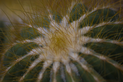 Thwaite Cactus Centre
