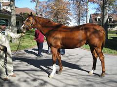 City Zip (first_dude) Tags: kentucky horseracing stallion thoroughbred lanesend cityzip lanesendfarm