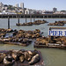 Pier 39 with seals