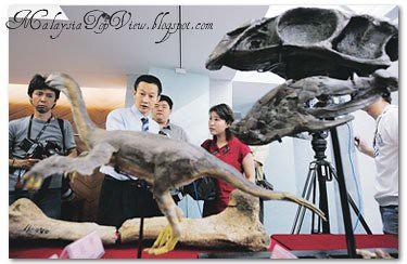 Sauropod - Fossil