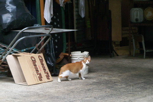 Kowloon Bay Cat