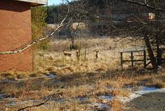 DSC_0476 (Blue Taco) Tags: abandoned urbandecay urbanexploration abandonedhospital