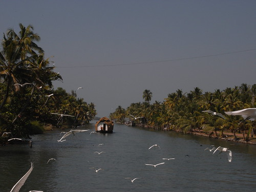 backwater cruise, Kerala.カモメの大群