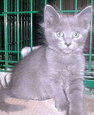 We have kittens 3266634994_181bf1fa48_o