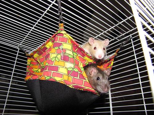 Milo and Rizo