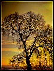 Golden Sunset (Doenjo) Tags: españa andalucía córdoba madinatalzahra hdr doenjo medinaazahara geotagged pentaxoptio33l retofs1 retofs2 instagram