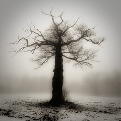 Royal fog (Grozz) Tags: tree fog landscape oak sweden stockholm royalpalace ebonyandivory otw justimagine topofthefog proudshopper imantsgross wanderinggypsies art2010