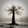 Royal fog (Grozz) Tags: tree fog landscape oak sweden stockholm royalpalace ebonyandivory otw justimagine topofthefog proudshopper imantsgross wanderinggypsies art2010