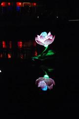 Flower Lantern, Hoi An, Vietnam