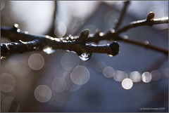 Dont cry, spring is near (grundi1) Tags: sun tree rain wasser tears sony 300 alpha regen welt regentropfen trnen hollenthon bucklige vanagram