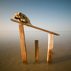 Death Territory _ Color (Khaled A.K) Tags: wood longexposure sea seascape death skull wooden surreal sa jeddah saudiarabia khaled territory ksa saudia jiddah kashkari