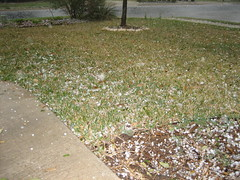 Hail on front lawn
