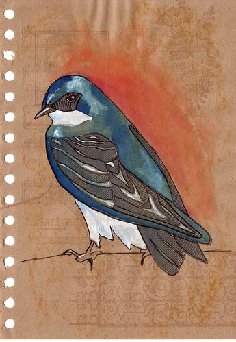 tree swallow 3