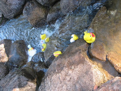 duckie race