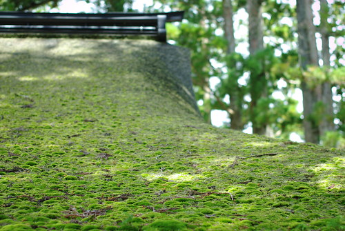 roof with moss