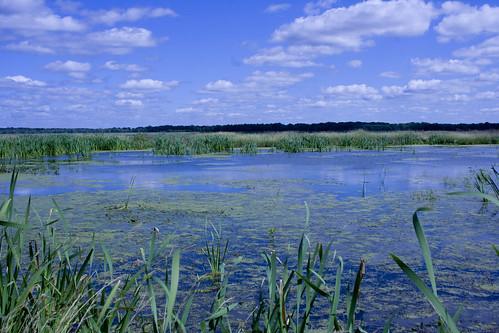 WetlandEmiquon08292009JGWard_MG_9022