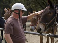 Mule Ride (MaryAnn Doherty) Tags: yosemite mule yosemitevalley muleride johndoherty yosemitenathionalpark