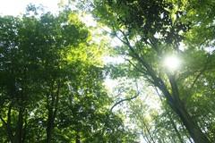 _MG_6437.JPG (zimbablade) Tags: trees sleepyhollow dougmiller videopoem