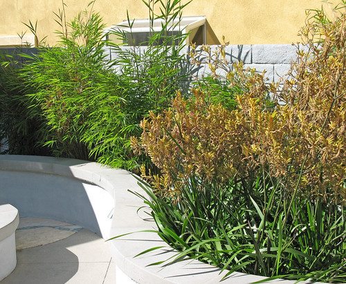 curved planter with bamboo and kangaroo paws