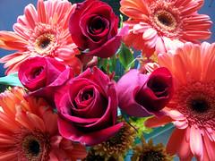 Flowers_1009d