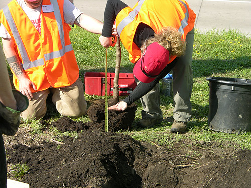 2011 Arbor Day Greenway root ball measure