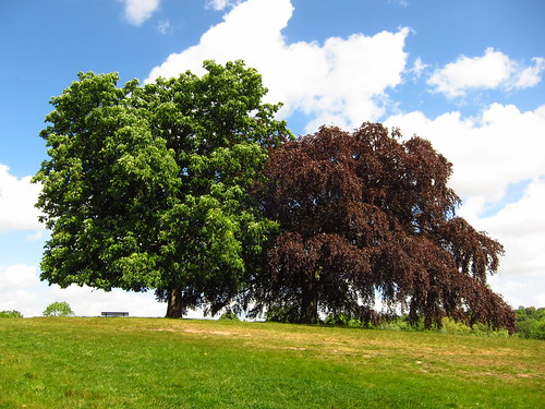 Trees on the South Meadow, Hampstead Heath