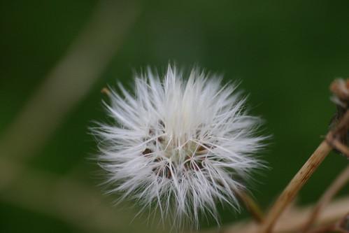 Molinillo de viento
