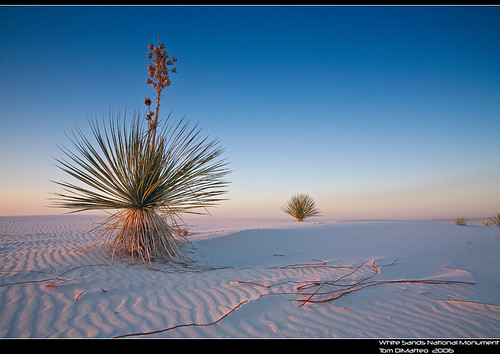 White Sands National Monument PSIMG_0862