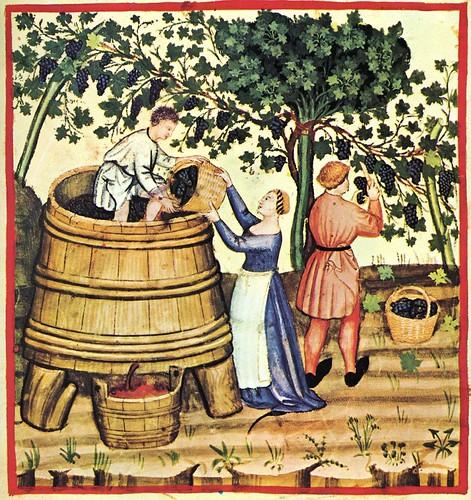 004- Otoño recoleccion de la uva y preparacion del mosto-TACUINUM SANITATIS- Biblioteca Casanetense Ms. 4182