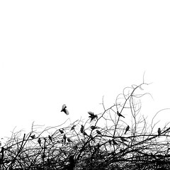 Birds Flying  High (BB (O.)) Tags: blue friends bw music india white black tree travelling birds square nikon mini crop minimalism bb pushkar rajasthan ajmer michaelbuble brahmin o 500x500 feelinggood d40