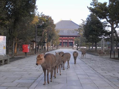 早朝の東大寺(南大門周辺)