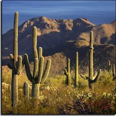 Journey's End... (MikeJonesPhoto) Tags: arizona nature landscape photographer scenic az professional 1530 supershot mikejonesphoto smithsouthwestern wwwmikejonesphotocom vosplusbellesphotos