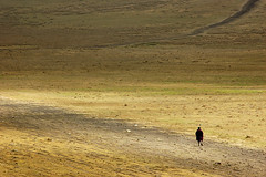 Distanze. (polafol) Tags: africa trip travel travelling tanzania alone walk d70s ngorongoro journey tribes terra masai piedi wander vita walkin afrique savana camminare parck old distanze serengheti trib inviaggio a national kartpostal solo masiero tribes walk alone polafol masieroalessandro nudi parck tnp camminare fotografiadiviaggio goonajourney beonteheroad