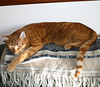 donovan_0208 (twentypoundtabby) Tags: cat sleeeping