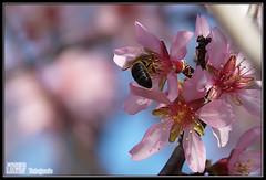 Trabajando (Luisma Rubio photo) Tags: flowers paisajes flores flower nature landscape spain panasonic animales castellon alcaladexivert alcossebre fz18 panasonicfz18 lmrp luismarubio