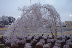 012809-12 Ice Storm Mall Landscape