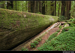 Avenue of the Giants PSIMG_2425 (Tom DiMatteo) Tags: pictures california travel seascape architecture tom forest canon austin wonderful landscape photography photo interiors all texas photographer image time photos tx machine images architectural professional part rights getty prints giants redwood avenue northern reserved rf pictureperfect corbis licensing rm dimatteo abigfave photoshelter wwwtomdimatteocom aphotofolio httptomdimatteophotosheltercom httpwwwfacebookcomtomdimatteo7 tomdimatteo
